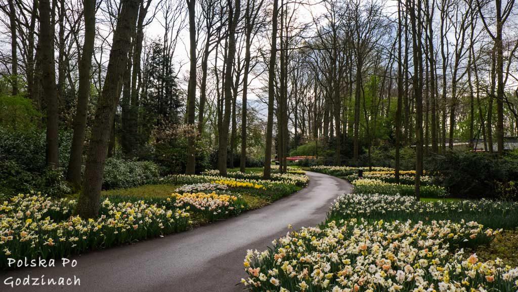Tulipany-1710