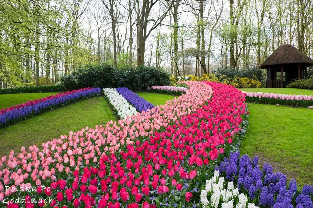 Tulipany-1718