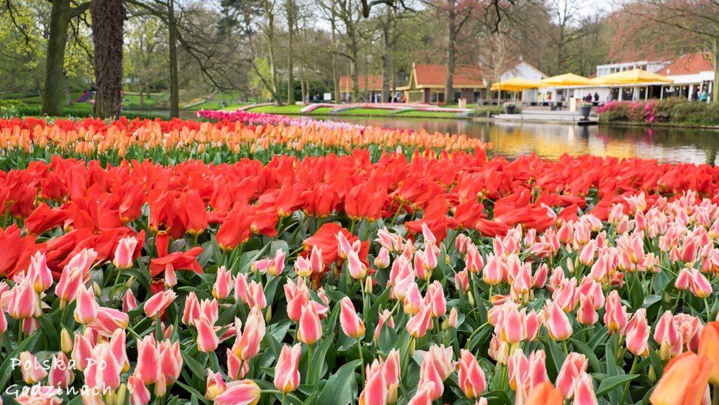 Tulipany-1729