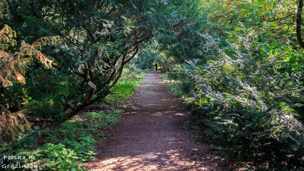 Zamek-Krasiczyn-park-4766
