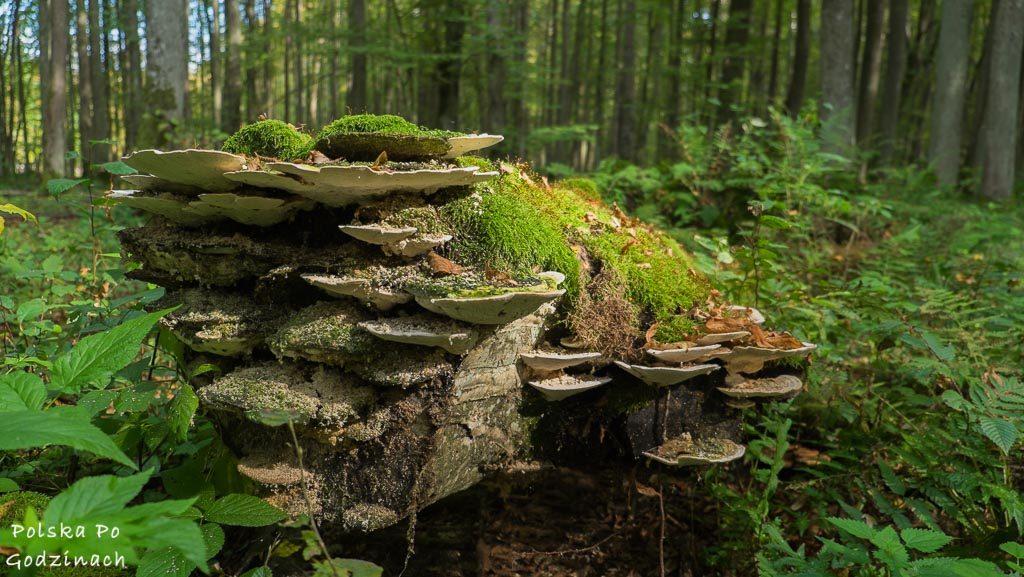 bialowieski-park-narodowy-5801