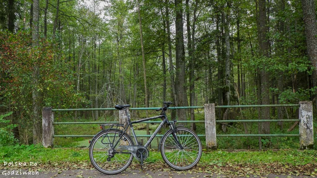 bialowieski-park-narodowy-5876
