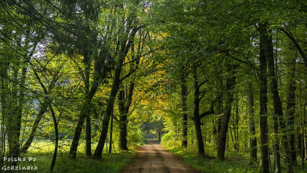 bialowieski-park-narodowy-5935
