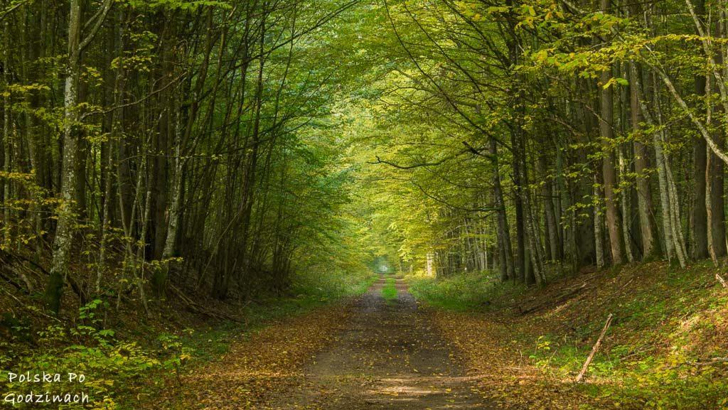 bialowieski-park-narodowy-5936