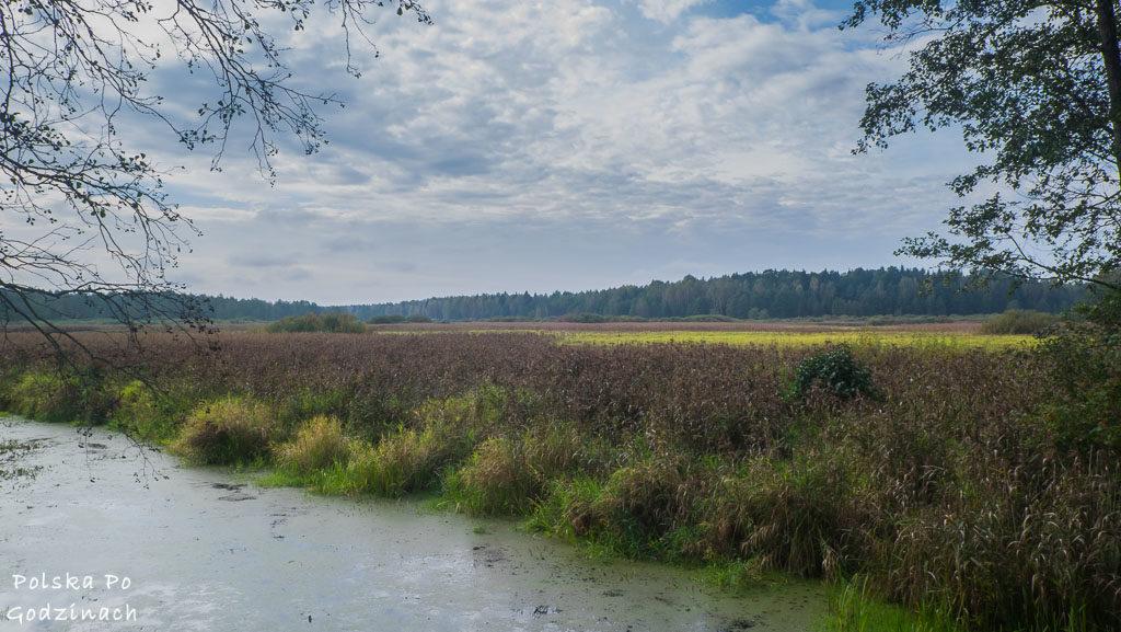 bialowieski-park-narodowy-5939