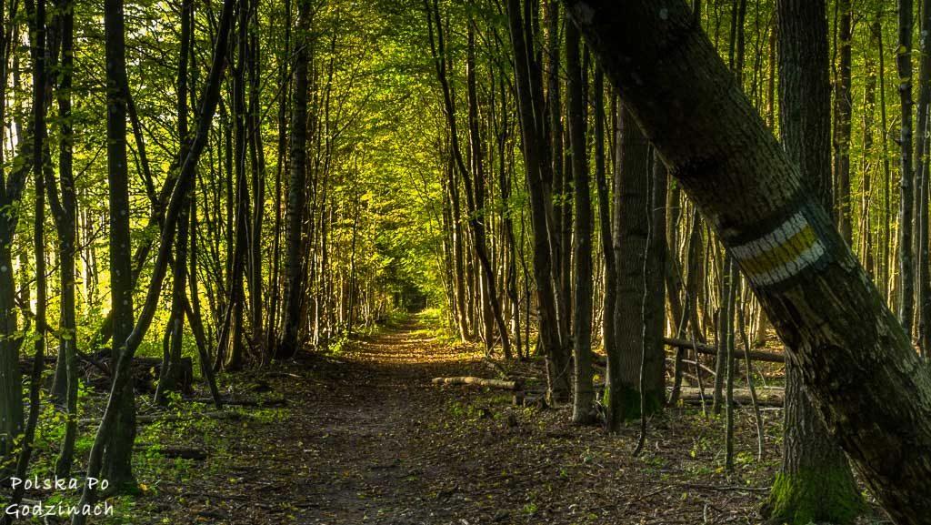bialowieski-park-narodowy-5754