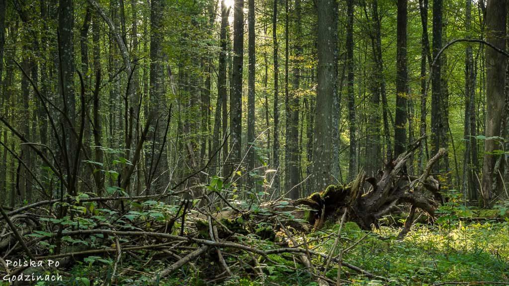 bialowieski-park-narodowy-5760