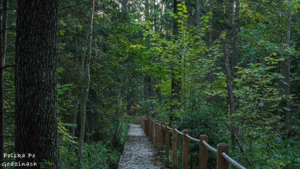 bialowieski-park-narodowy-5765