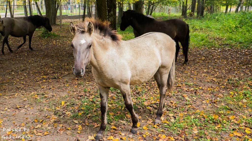 bialowieski-park-narodowy-5926