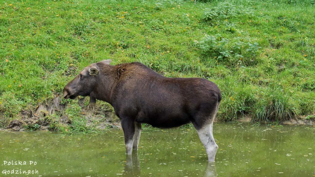 bialowieski-park-narodowy-5983