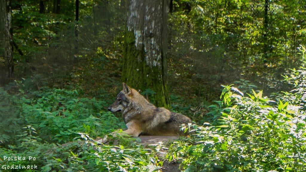 bialowieski-park-narodowy-5994
