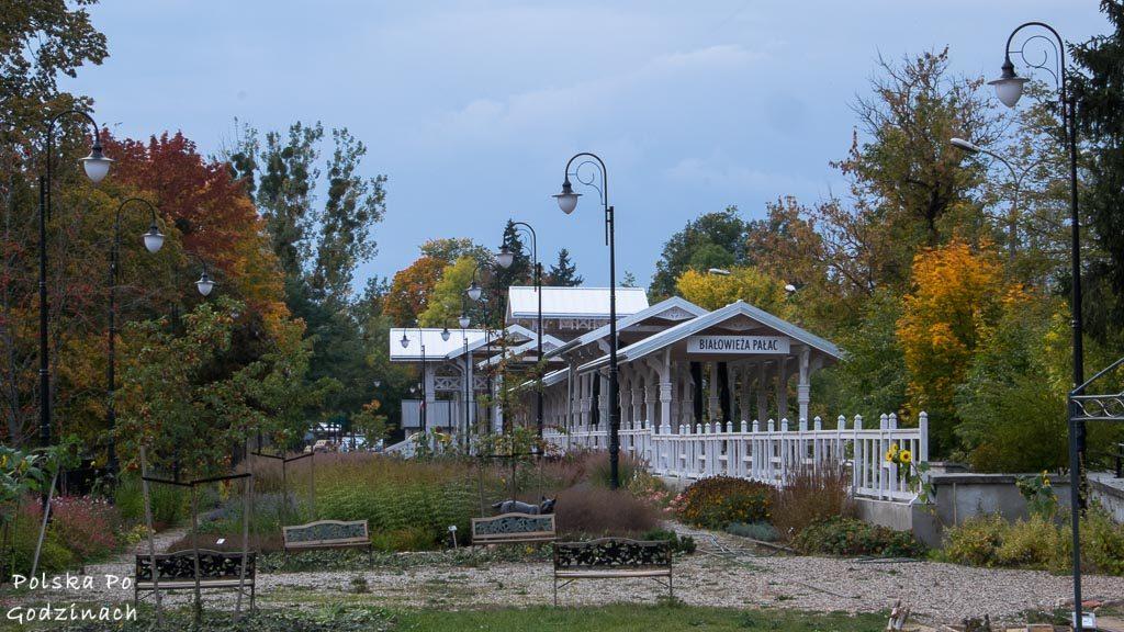 bialowieski-park-narodowy-6050