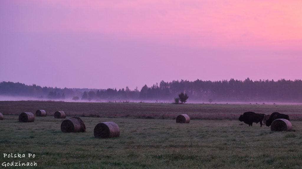 bialowieski-park-narodowy-6059
