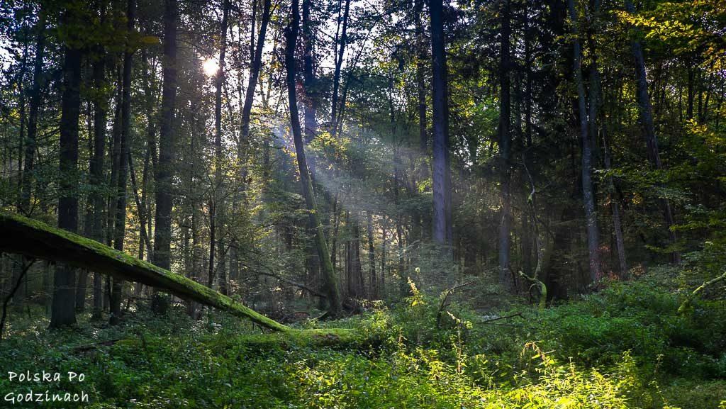 bialowieski-park-narodowy-6097