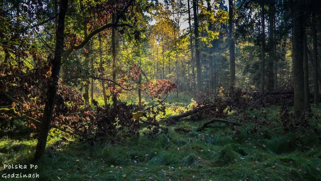 bialowieski-park-narodowy-6109
