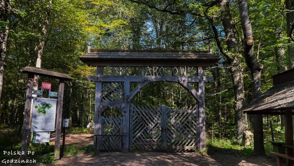 bialowieski-park-narodowy-6130