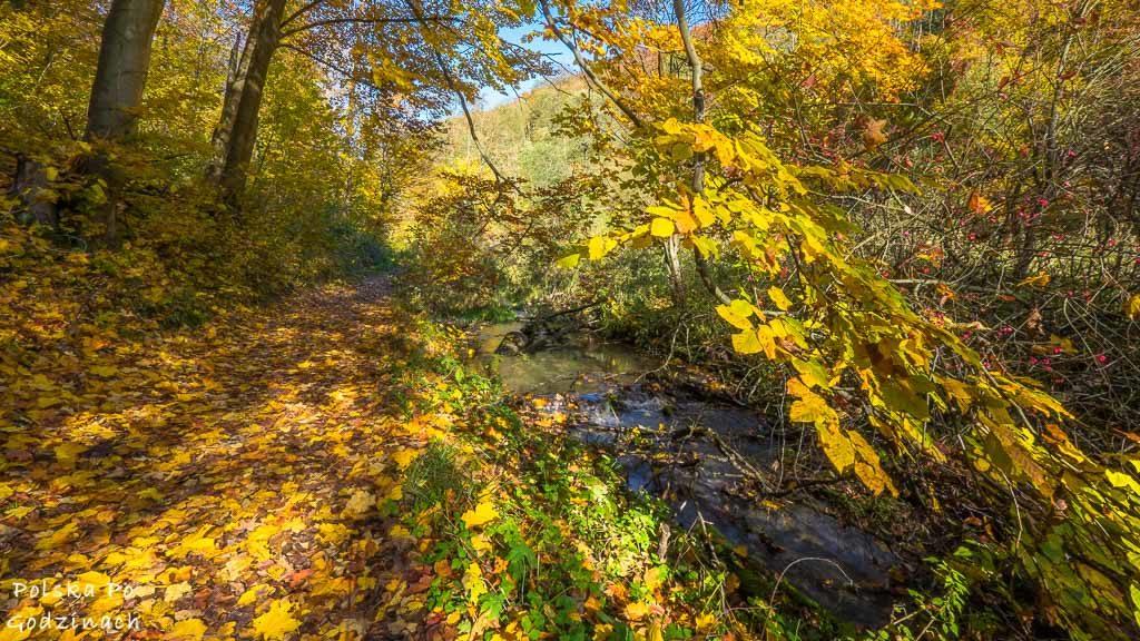 ojcowski-park-narodowy-dolina-saspowska