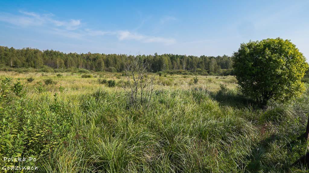 poleski-park-narodowy-5336
