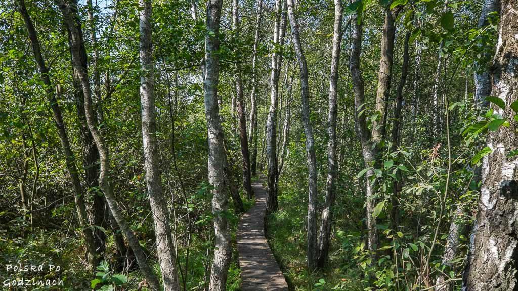 poleski-park-narodowy-5347