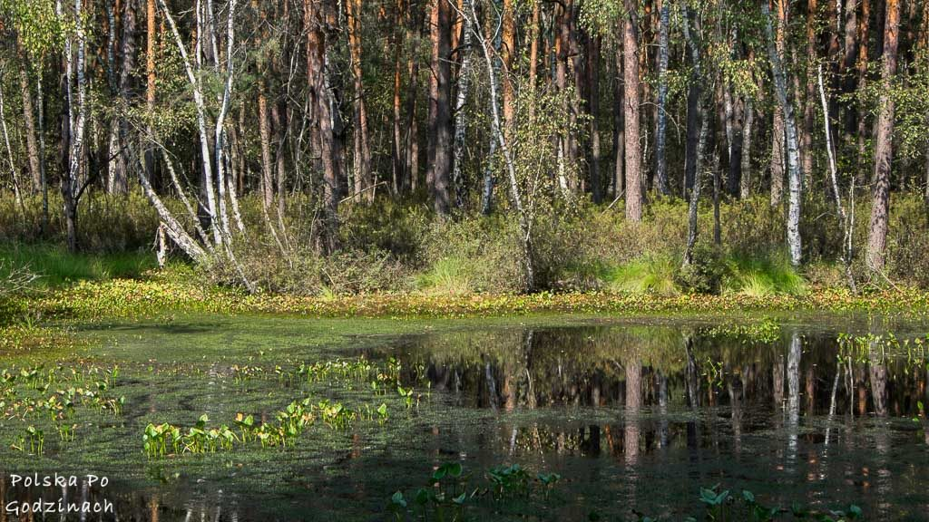 poleski-park-narodowy-5382