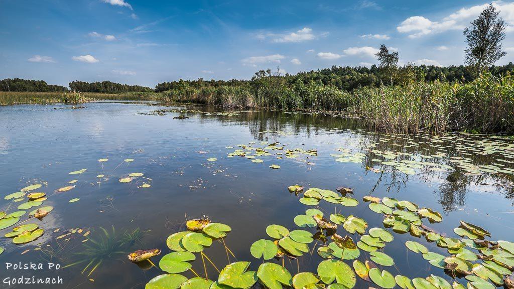 poleski-park-narodowy-5404
