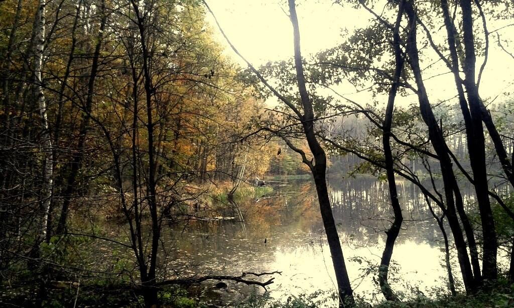 niepołomice jesienią