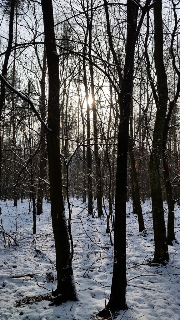 puszcza niepołomicka zimą