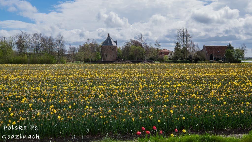 Tulipany-1842