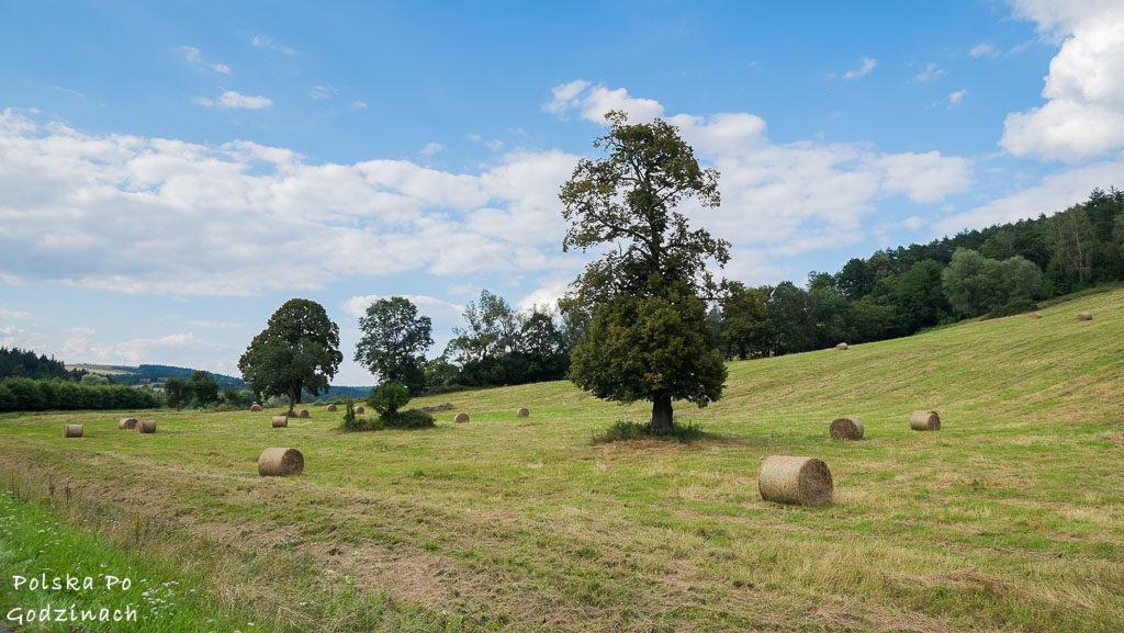Przemyski-Park-Krajobrazowy-rowerem-4630
