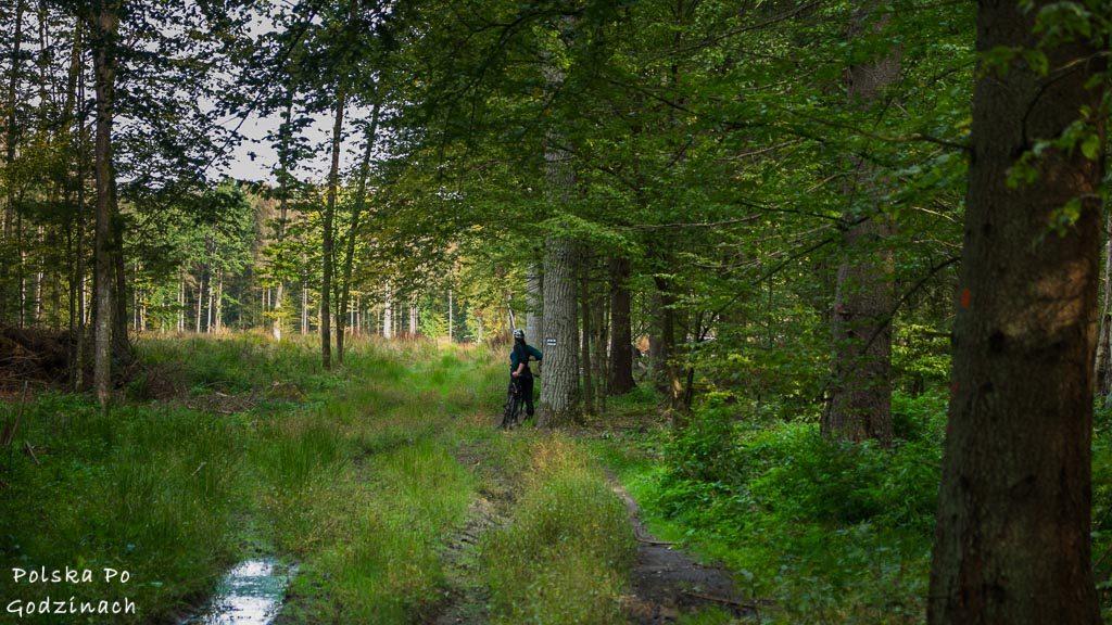 bialowieski-park-narodowy-5780
