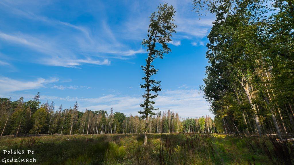 bialowieski-park-narodowy-5784