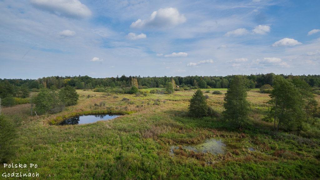 bialowieski-park-narodowy-5832