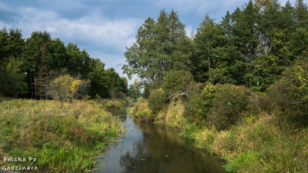 bialowieski-park-narodowy-5838