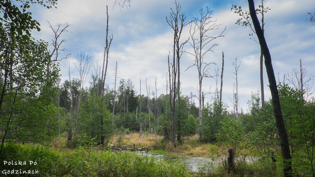bialowieski-park-narodowy-5877