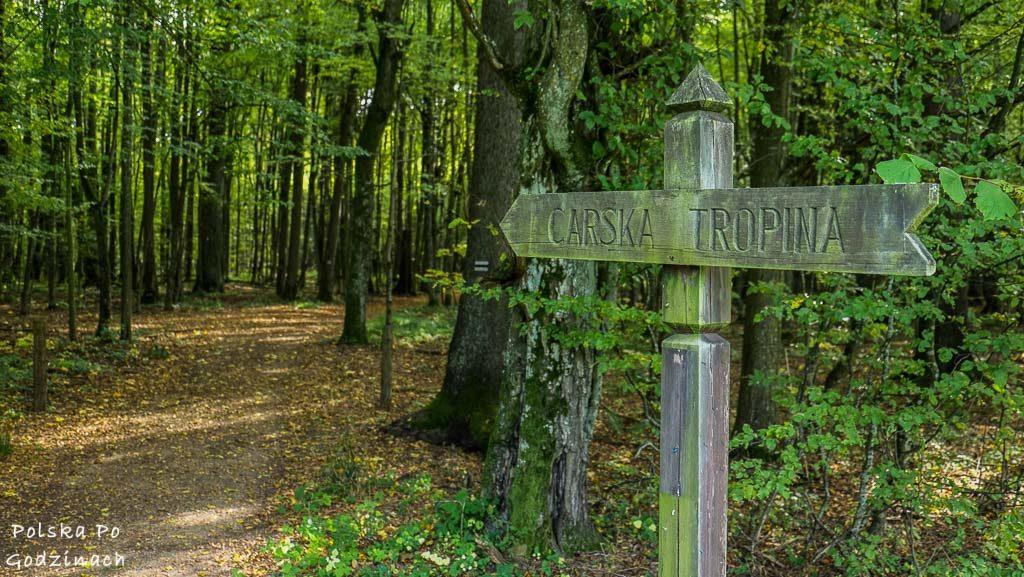 bialowieski-park-narodowy-carska-tropina
