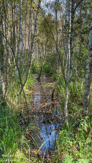 poleski-park-narodowy-5368