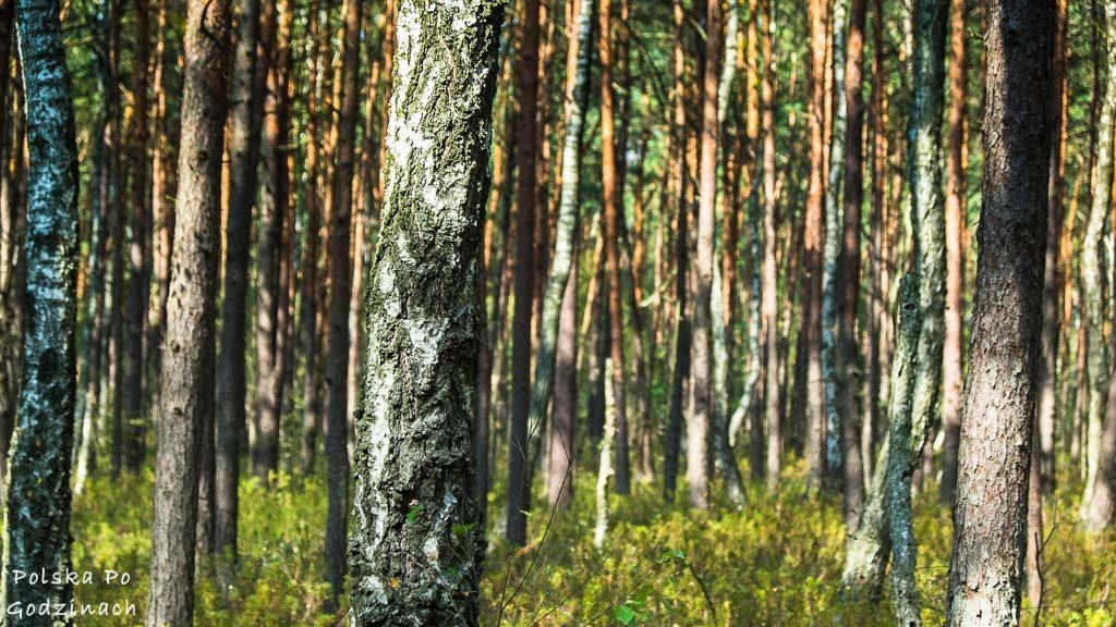 poleski-park-narodowy-5388