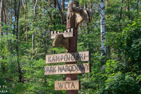 Puszcza Kampinoska- Historia skryta w leśnym gąszczu