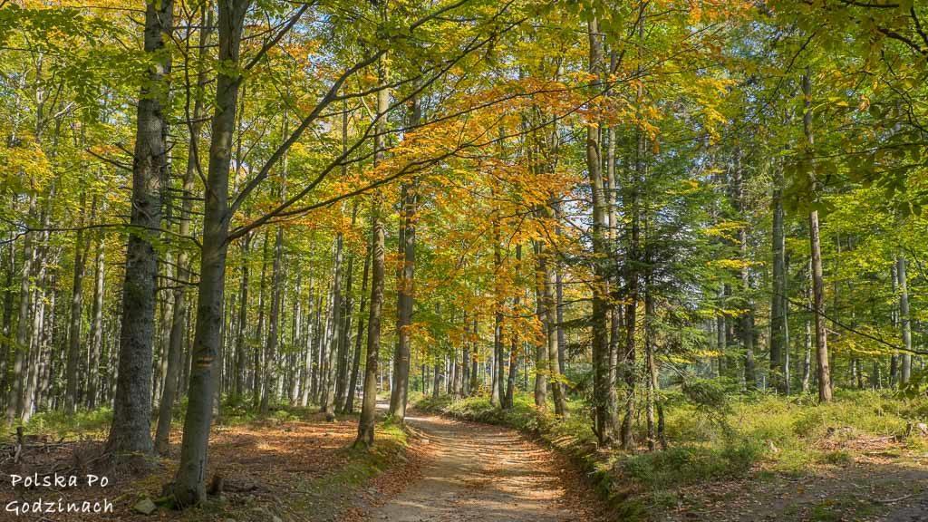 trasa rowerowa przez Beskid Sądecki wsród kolorowych jesiennych drzew