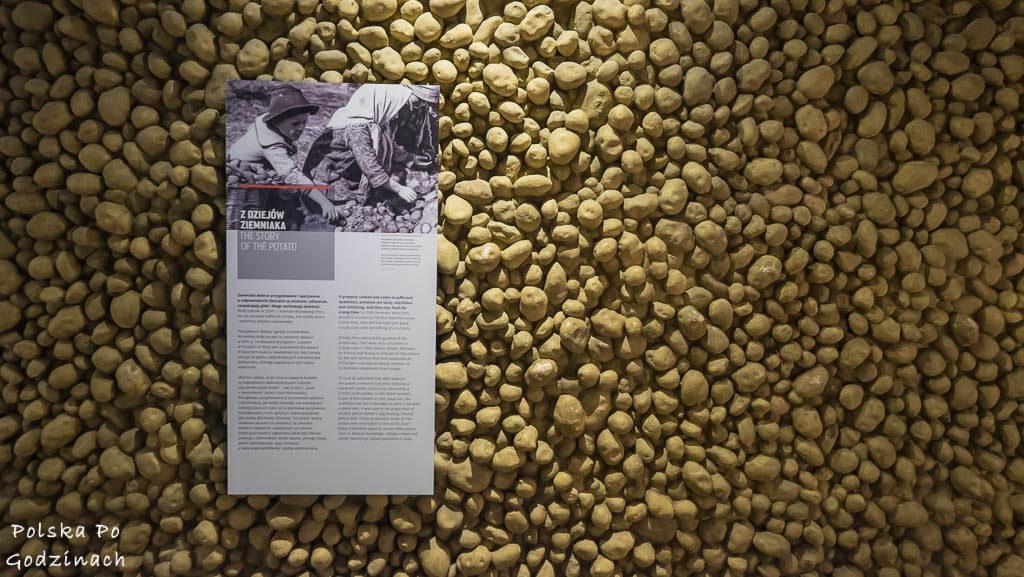 W Muzeum Emiracji w Gdyni dowiecie się jak ważnym elementem diety był ziemniak