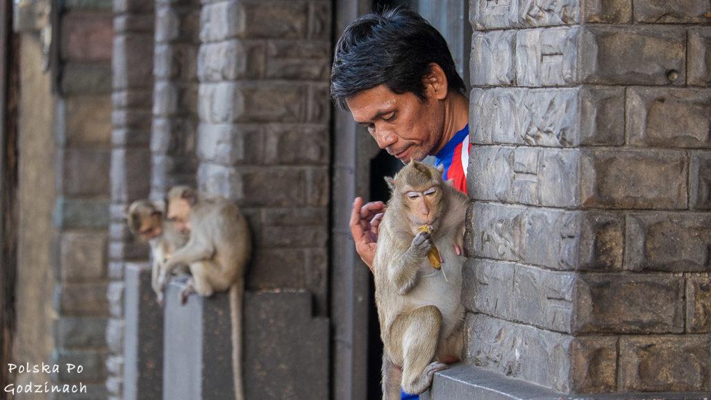 Lop Buri czyli miasto małp w Tajlandii. Mieszkaniec głaszcze małpę.