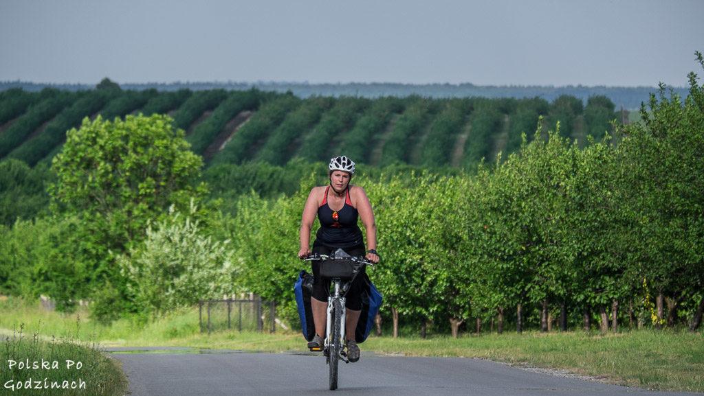 Okolice Szydłowa to zagłębie śliwkowe. Po okolicznych drogach można jeździć rowerem.
