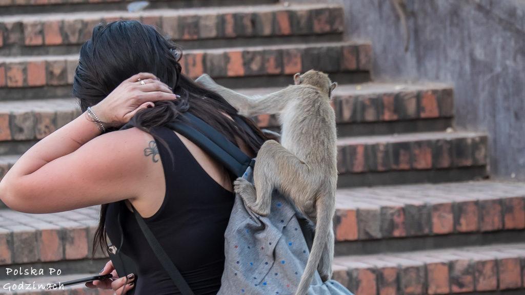 Małpie miasto czyli Lop Buri