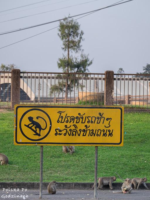 Znak przed świątynią w Lop Buri - małpim miastem