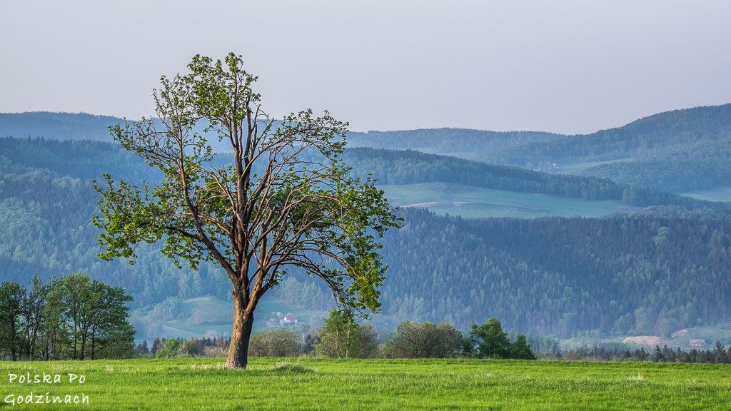 Dolny Śląsk jest naprawdę zielony- droga z Miedzianki na Mniszków