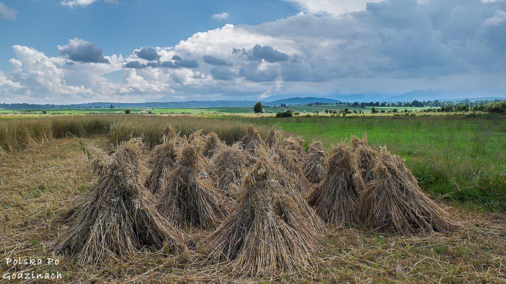 Sianokosy i żniwa w okolicy Szlaku Wokół Tatr