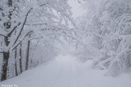 Z Bielska-Białej na Szyndzielnię – łatwy górski szlak