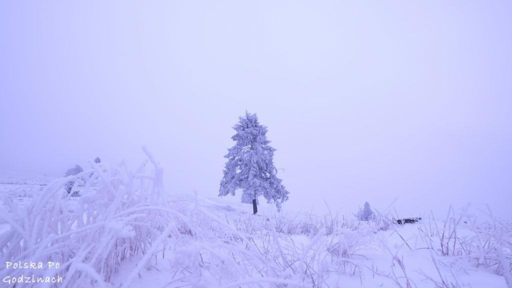 gory zima drzewo snieg
