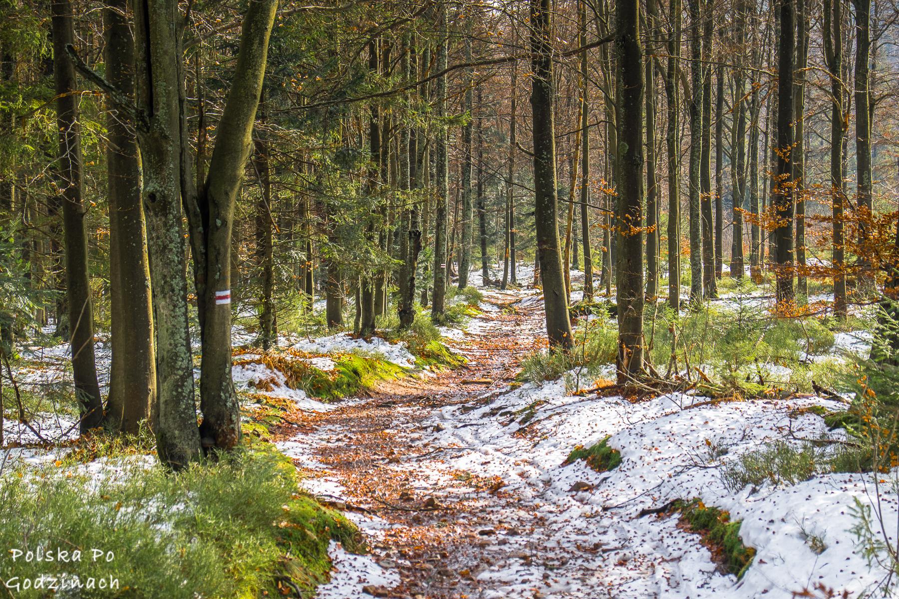 zimowe szlaki w beskidzie sadeckim