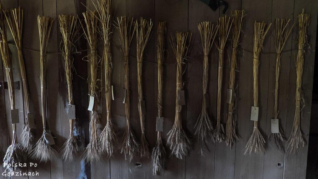 różne rodzaje zbóż we wnętrzu zabytkowego młyna w Grucznie w kujawsko-pomorskim
